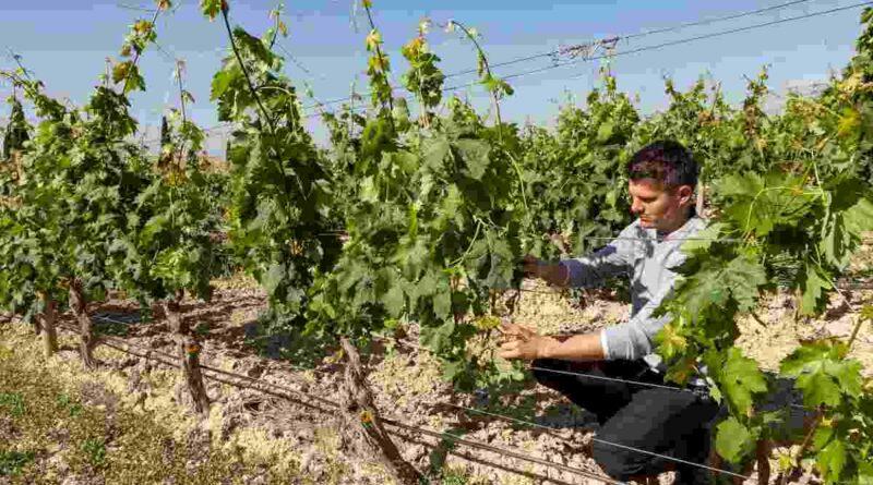 Murua y su viñedo ecológico