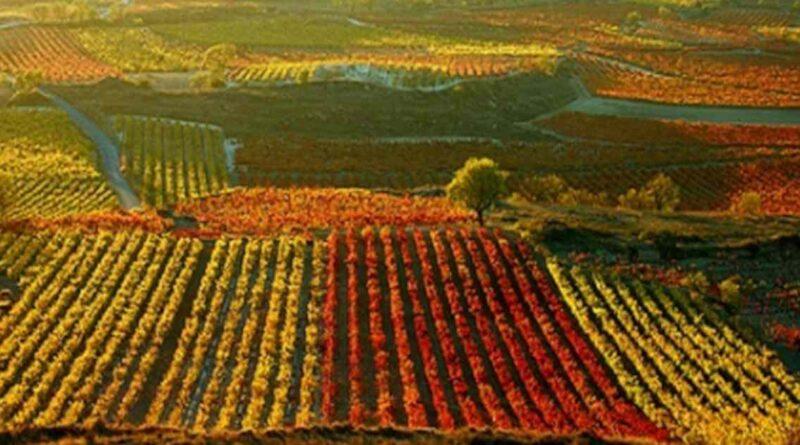 Se aprueban las normas para la vendimia 2021 en La Rioja