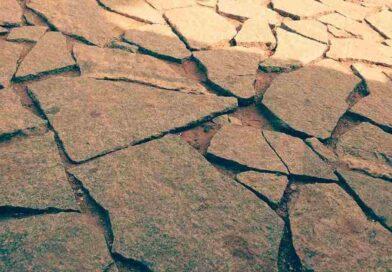 El Primer Simposio de Viticultura Regenerativa se celebra en el Día mundial contra la desertificación y la sequía